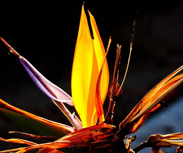 Flower_0565.jpg