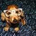 my dog lmao