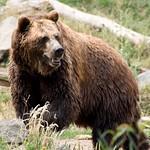 Woodland Park Zoo Seattle 079