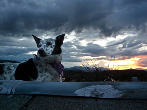 pictures roof sunset dog oregon lumix photo cross image photos picture panasonic adobe thunderstorm bordercollie ringo dingo acd lightroom blueheeler moik rescuedog klamathfalls traildog dogonroof adobelightroom tz5 dmctz5 cowardlycowdog bestdogforrunning bestbreedforrunning bestbreedformountainbiking dogsonroof