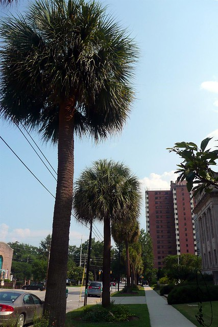 Palmetto Apartments New Orleans