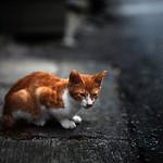 cat # 153.5