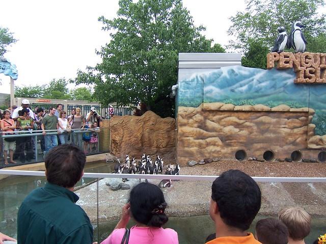 penguins at adventure aquarium
