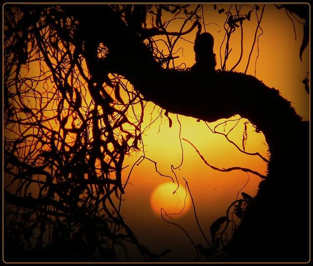 Sonnenaufgang im August - morning walk