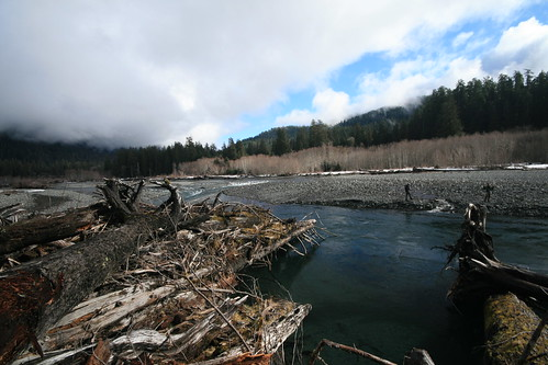 Scenic skunking on the hoh river for winter steelhead for Hoh river fishing