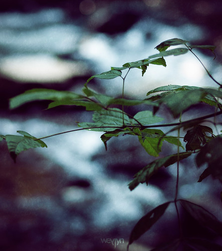 old blue green texture leaves forest vintage dark 50mm leaf stream purple bokeh olympus f2 noise underexposed e510
