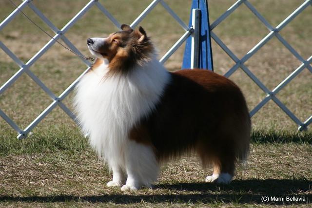Dog Show Brooksville Fl
