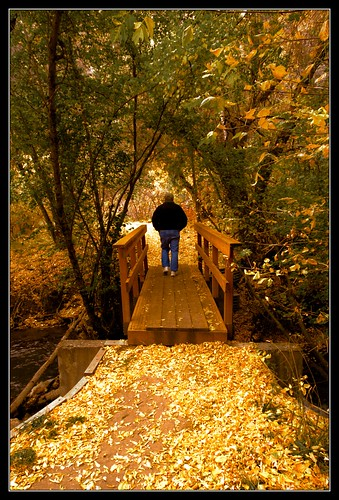 bridge autumn trees usa fall colors leaves landscape nikon october dad 2009 logancanyon d90 sumsion nikond90 sumsioncom