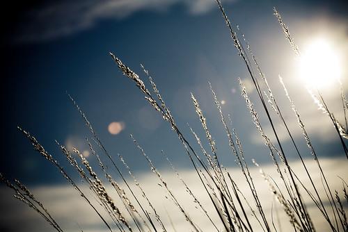 winter light sky sun snow nature grass lines wisconsin clouds landscape midwest glow january 100mm madison prairie 2009 cherokeemarsh canoneos5d flickrexplore canonef100400mmf4556lisusm lorenzemlicka