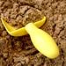 Yellow Shovel by LBOI