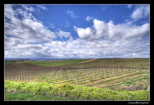 california clouds canon eos rebel vineyard vines winery callaway temecula grape 1022mm hdr 10mm xti bej 400d markeloper
