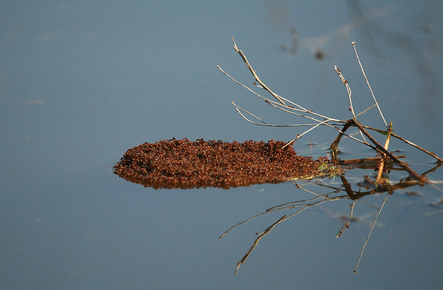 ant bed float flickr photo sharing