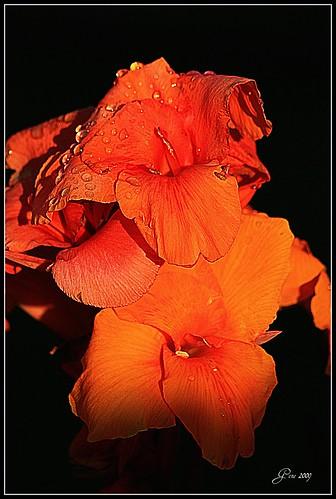 flowers orange flower sunrise photography wa mothernature pasco tricities