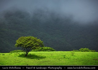 Oman - Lush Misty Greenness of Salalah Mountains