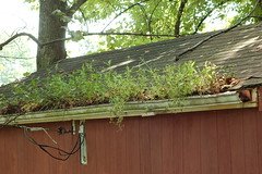 Green Roof, Country style