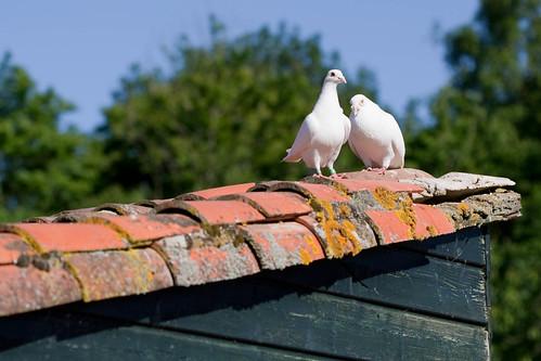 signification des oiseaux qui croisent votre chemin ou plut t votre ciel le blog de tous. Black Bedroom Furniture Sets. Home Design Ideas