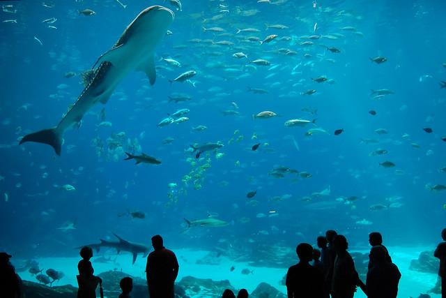 2009_08_12 Georgia Aquarium
