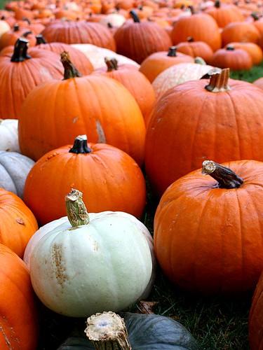 autumn ny newyork fall gourds pumpkin october pumpkins harvest gourd squash mamaroneck stthomasepiscopalchurch platinumheartaward
