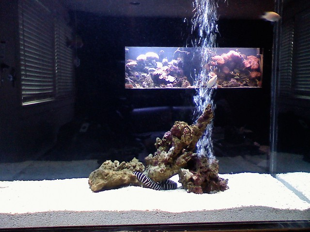 View of 300 gallon reef tank looking through new 250 for 300 gallon fish tank