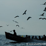 Birds and Boat - Inle Lake, Burma