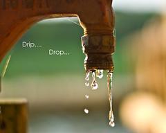 Drip-Drop - Web