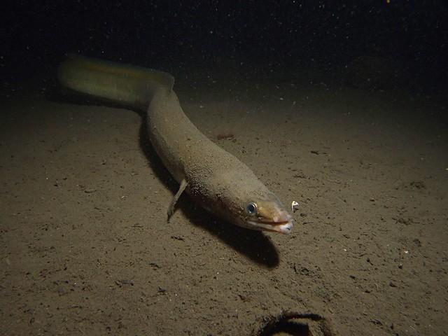 eel-03
