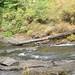 Small photo of Alsea Falls, OR