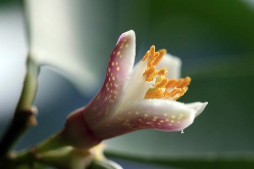 23_a flower