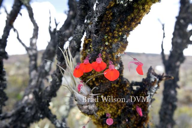 Carnivores et orchidées in situ  5766475203_b30dcaed10_z