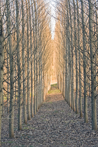 tree path winter oregon canon eos digital rebel xsi flickr getty images collection