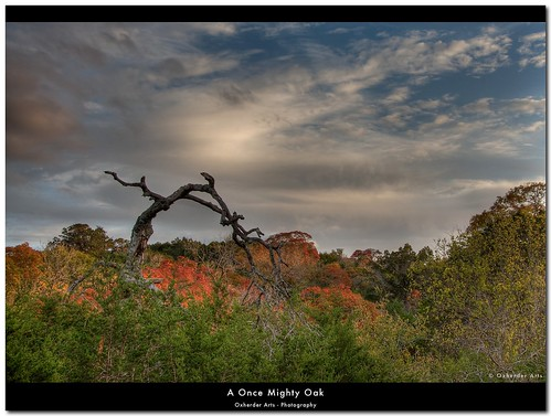 tree austin dead oak texas driftwood hdr texashillcountry photomatix 3exp deadoaktree pixelmator top20texas