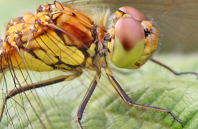 walkabouts 368, dragonfly, heysham