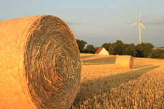 prairie, agriculture, straw, hay, field, plant, wind, rural area,