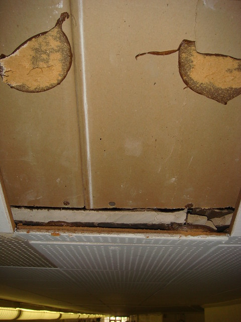 Ceiling substrate cross section flickr photo sharing for Gypsum board asbestos