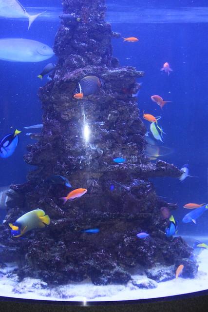 Tropical fish tank explore jim the photographer 39 s for Jims exotic fish