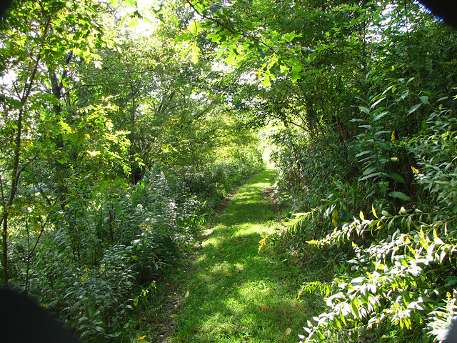 green path into the - photo #35