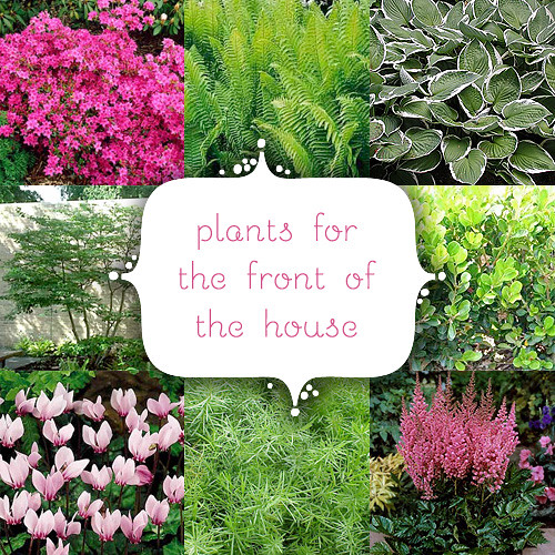 Couvers learn ideas for planting hostas for Plants for front of house ideas