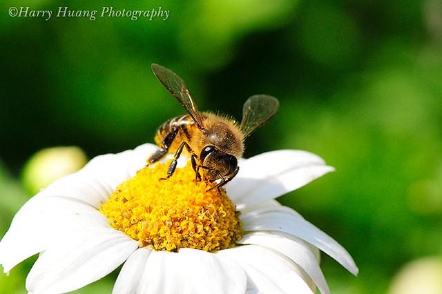 123 bee adult