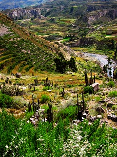Sur la route de Chivay au Colca Canyon - On the road from Chivay to Colca Canyon