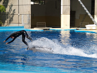 Εικόνα από Dolphin. madrid animal zoo delfín