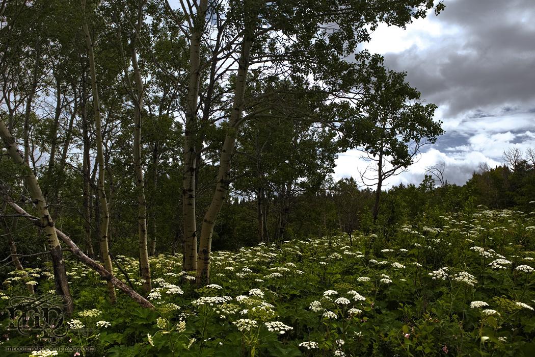 Cypress Hills 2007: Beautiful Hill Side [2 of 2]
