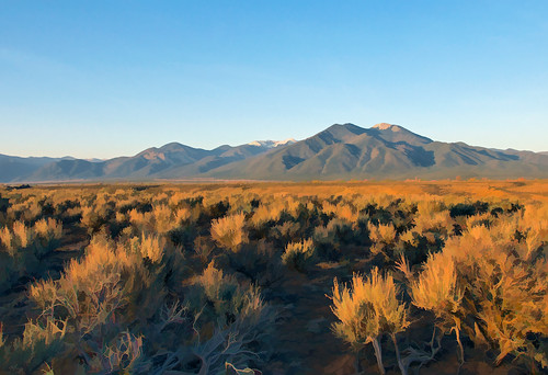Sagebrush at sunset near Taos mountain