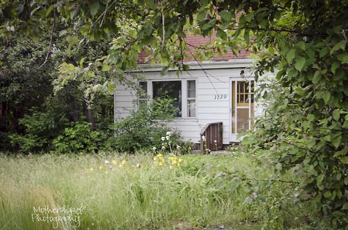 169:365 Overgrown