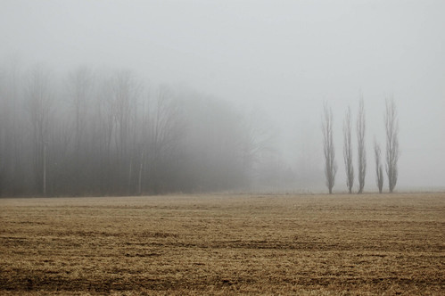 trees ny newyork fog fun dryden nikond40 stateoftheunionny