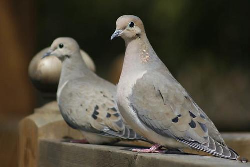 lovebirds by kaylavdoyle