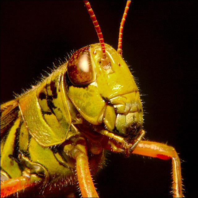 ~ Aperture Grasshopper, Aperture ~