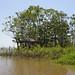 Small photo of Amazon River