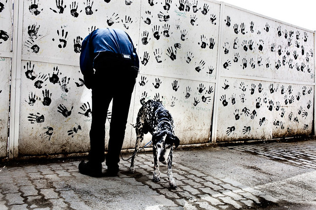 Animals in Streets