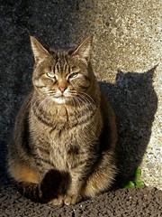 Fat cat in the sun