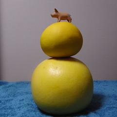 cochonnet, buntan et banpeiyu: 文旦と晩白柚